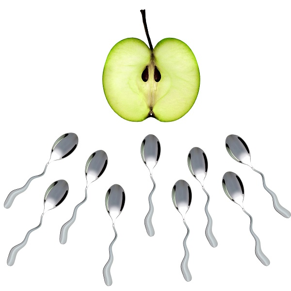 how sperm works