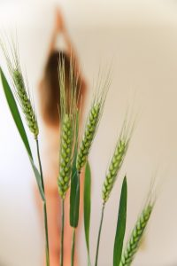 Woman out of focus, behind sprouting grains